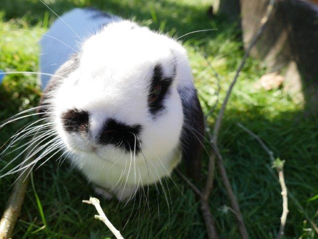 Keeping Rabbits & Vaccinations | Kawerau District Council